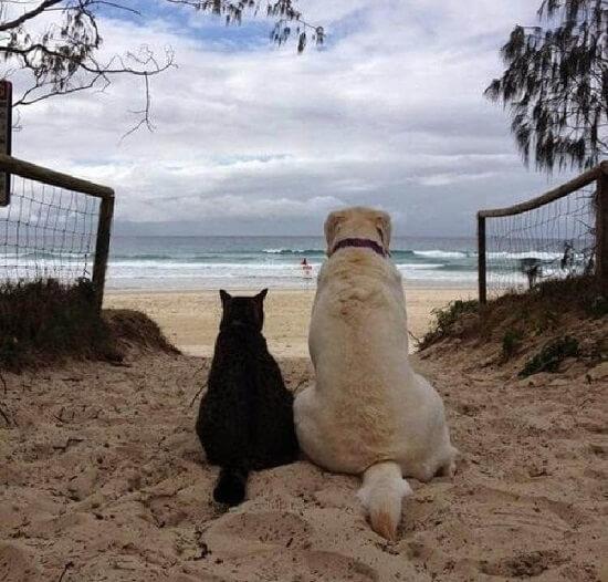 kucing dan anjing akur