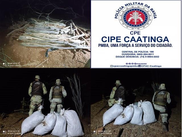 Cipe Caatinga apreende 50 kg de maconha enterrados em quintal de residência em Juazeiro