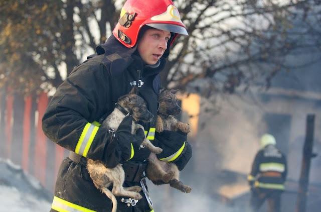 18 животных спасенных пожарными!  Пожарные настоящие герои!!!