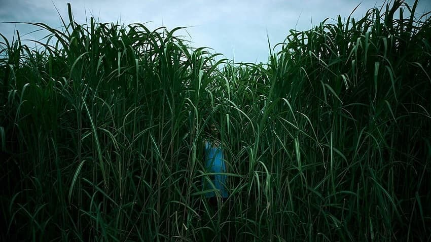 В чём смысл фильма «В высокой траве» - разбор и объяснение сюжета и концовки