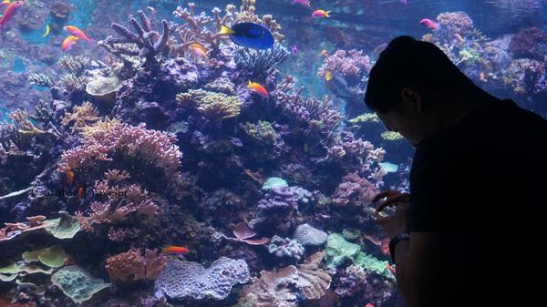 Singapura, SEA marine aquarium,