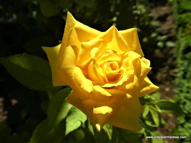 flores en los jardines del Generalife Granada