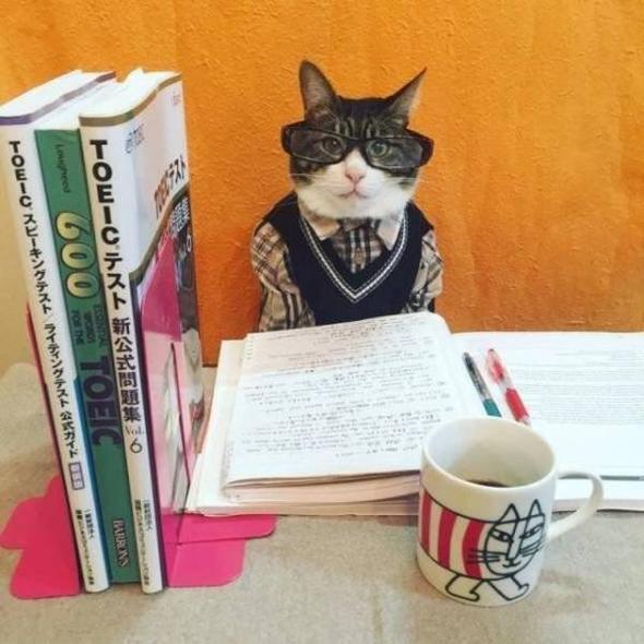 смешной кот в очках и с книгами