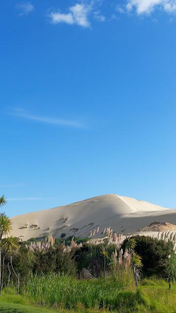 Desert Oasis free nature wallpaper