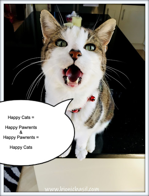 Top Tips For Cat Pawrents ©BionicBasil® Happy Cats and Happy Pawrents