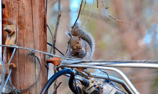 How to protect an electrical substation from wildlife