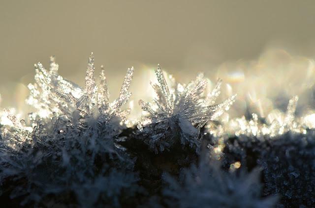 glace lichen hiver jardin givre
