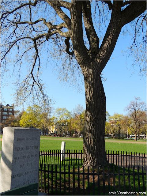 Árbol bajo el que Washington Asumió el Mando en el Cambridge Common