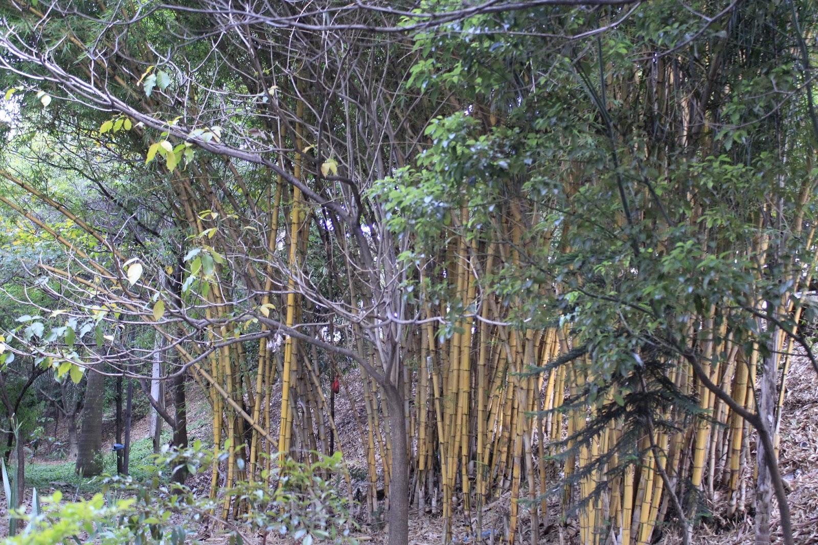 c3834e8e90 São mais de 100 espécies de árvores