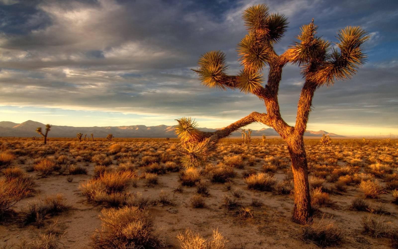 All Hot Informations: Download Desert HD Wallpapers 1080p