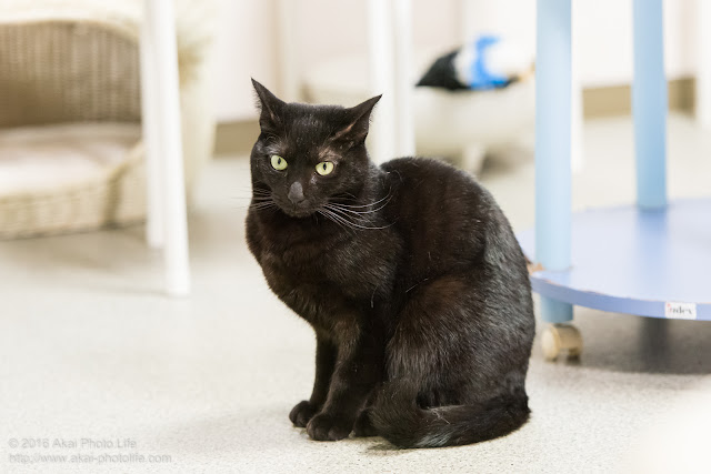 西国分寺シェルターにいた黒猫が座っている写真