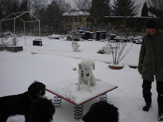 exercício na neve para cães