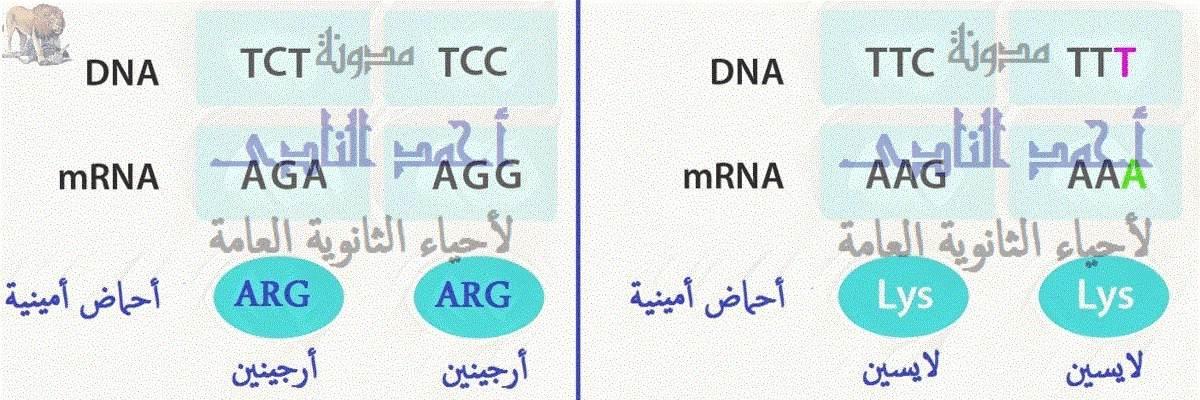 الجين – M.RNA – الشفرة الوراثية – طفرة عديمة المعنى -  الثالث الثانوى
