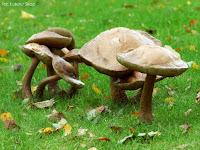 grzyby na trawniku w ogrodzie