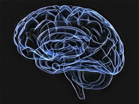 мозок нейромаркетинга