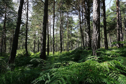 Melek Deforestasi Demi Hutan Hijau untuk Penerus Bangsa