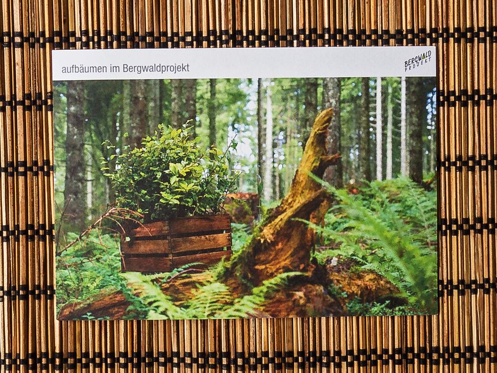 Die Vorderseite der Postarte vom Bergwaldprojekt zeigt eine Holzkiste mit Pflanzen im Wald