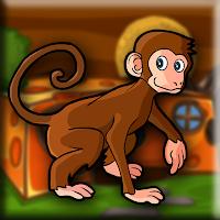 Rhesus Macaque Escape Wal…