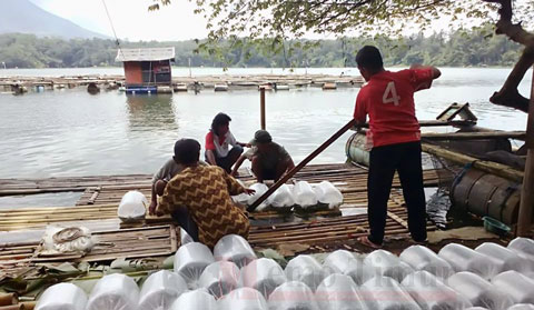 Budidaya Ikan Tawar di Ranu Klakah