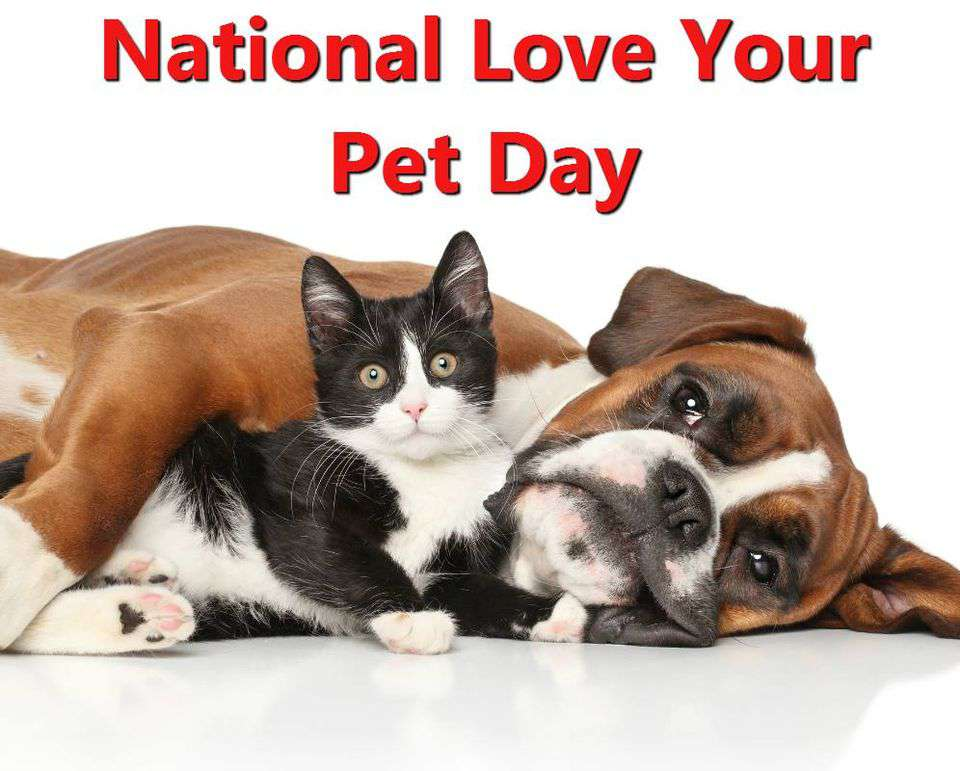 National Love Your Pet Day Wishes pics free download