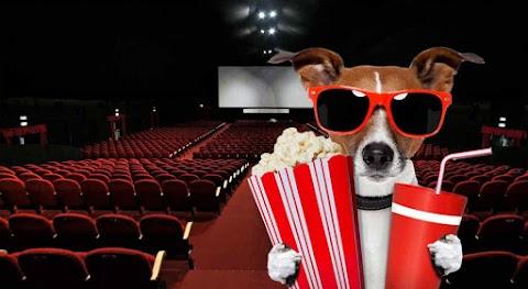 Películas Sobrenaturales, acción, romanse (La cartelera se refresca con nuevos estrenos)