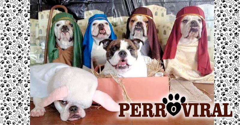 Un Pesebre hecho con adorables perros le da la vuelta a Internet