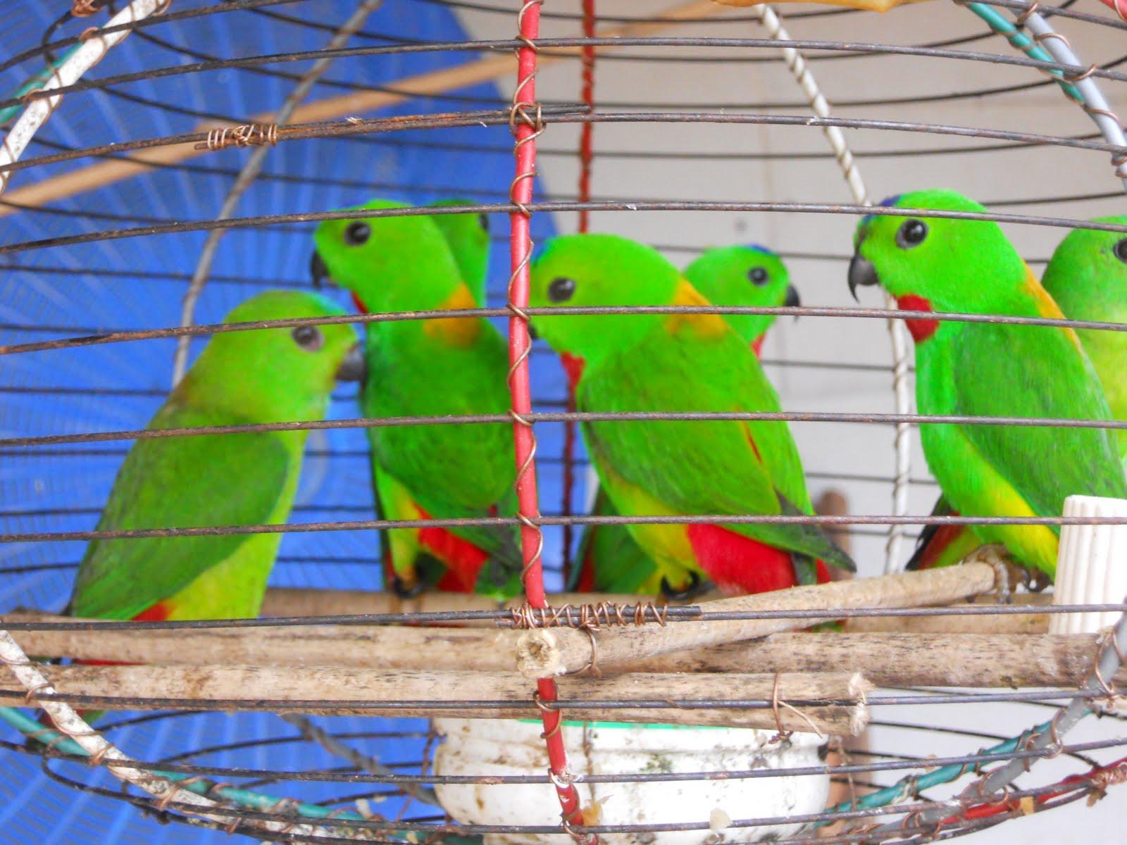 Gambar sketsa burung nuri 28 images burung burung