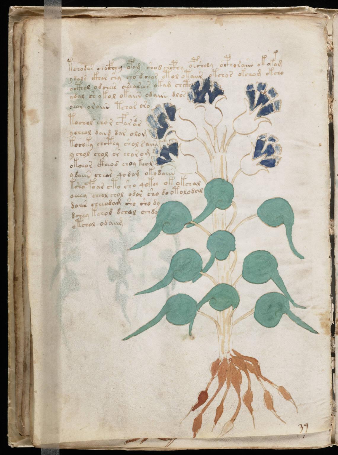 manuscrito048