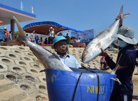 Cảng cá trên đảo Lý Sơn luôn nhộn nhịp từ sau tháng Giêng đến nay.