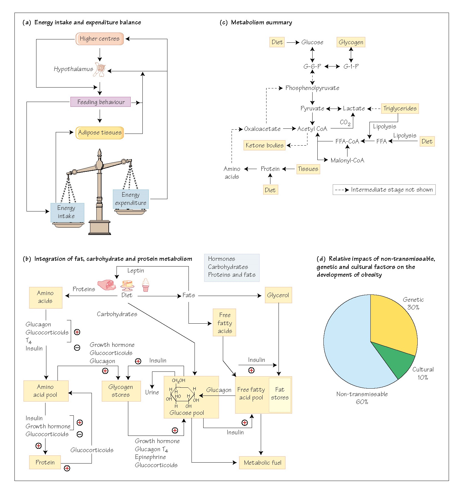 Energy Homoeostasis: I Summary
