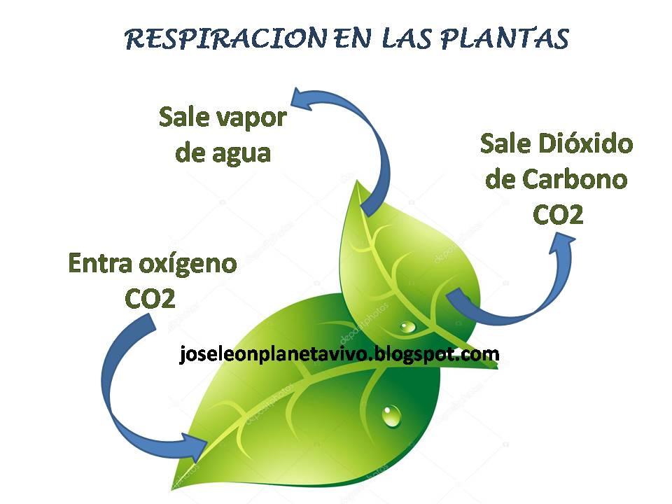 Respiracion De Las Plantas Gif: Planeta Vivo: La Respiración En Las Plantas