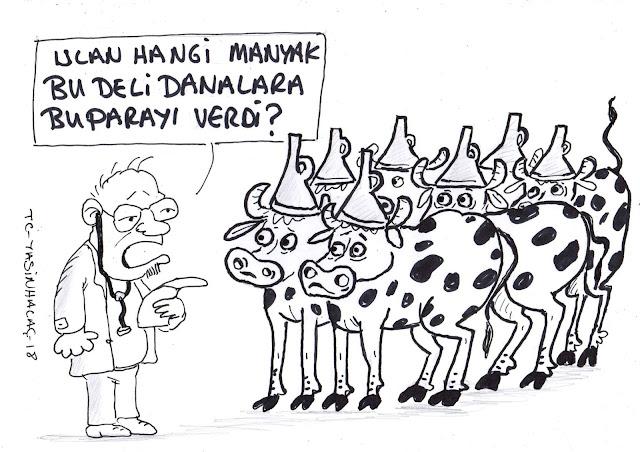 deli dana karikatür