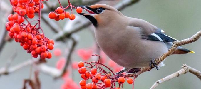 Μία περίεργη προειδοποίηση βρίσκεται σε ισχύ στην Μινεσότα των ΗΠΑ για αλλόκοτη συμπεριφορά των πουλιών