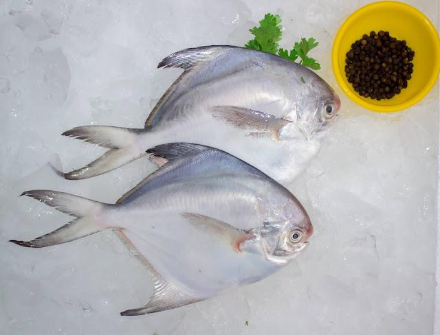 Daftar Harga Supplier Jual Ikan Bawal Bibit & Konsumsi Kendari, Sulawesi Tenggara