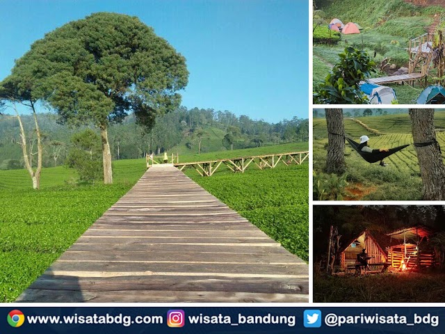 Nuansa Riung Gunung, Wisata Alam Perkebunan Teh yang Lagi Ngehits di Pangalengan Bandung Selatan