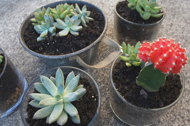DIY succulent and cacti in glass and metal containers for mother's day gift.