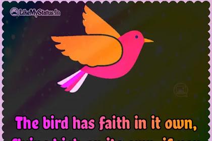 The bird has faith in it own