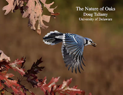 """Wild Ones Presents """"The Nature of Oaks: The Rich Ecology of Our Most Essential Native Trees"""""""