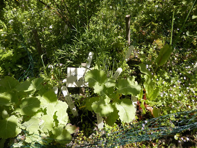 Garden visit, the forest garden at CAT.  From UK eco friendly and garden blogger secondhandsusie.blogspot.com #forestgarden #organicgarden #nodiggarden #centreforalternativetechnology #garden #gardenblogger