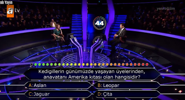 , Kedigillerden anavatanı Amerika olan hangisidir?