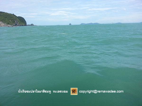 นั่งเรือชมโลมาสีชมพู จ.นครศรีธรรมราช