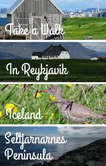 Take a Walk in Reykjavik: Get in Touch with Icelandic Nature in Seltjarnarnes Without Leaving The City Limits