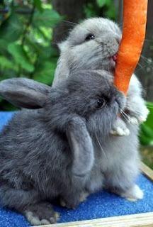 makanan kelinci yang baik