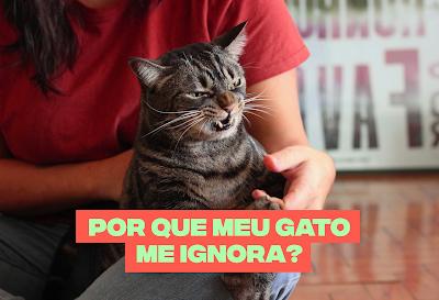 Por que os gatos ignoram os humanos?