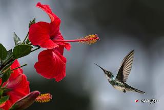 صور جميلة للطيور