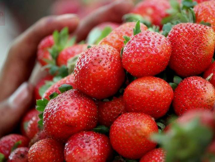 how to prepare strawberries for winter