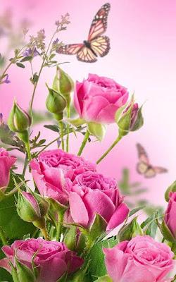 rose flower images full size