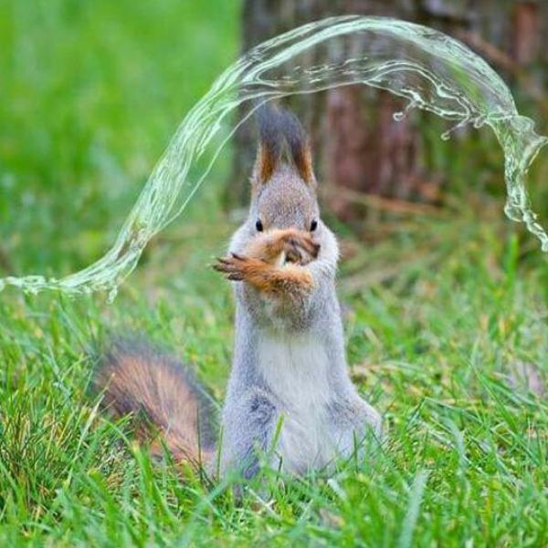fotos engraçadas de esquilos