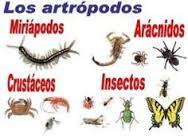 http://cplosangeles.juntaextremadura.net/web/edilim/curso_3/cmedio/animales_invertebrados_3/artropodos/artropodos.html