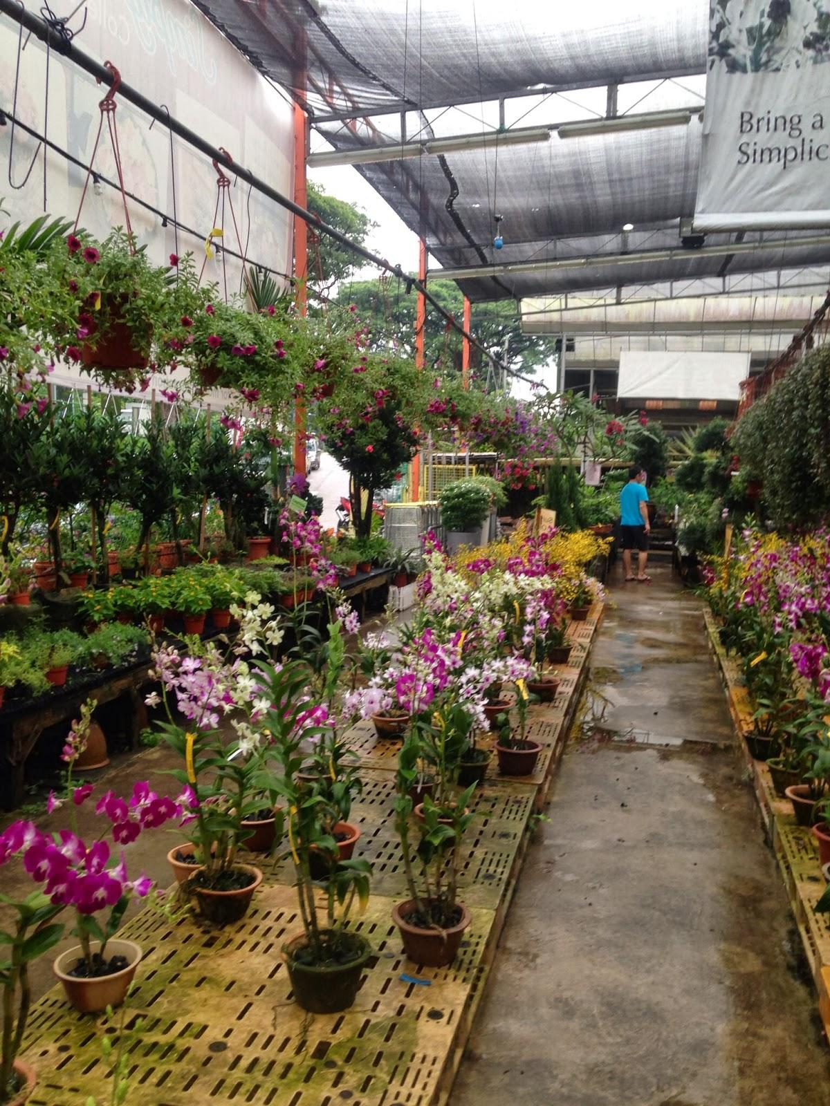 Plant Nursery On Thomson Road Singapore